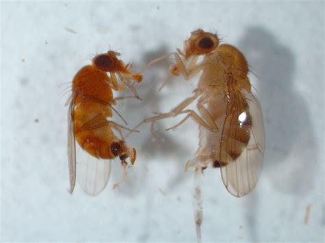 Spotted Wing Drosophila Update