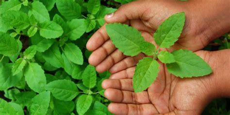 diabetes ayurvedic herbal remedies  manage blood sugar