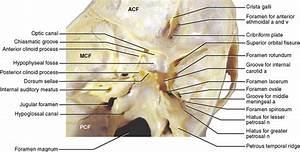 6: The Skull | Pocket Dentistry