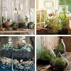 Decorating dilemma: house plants | Terraria, Contemporary ...