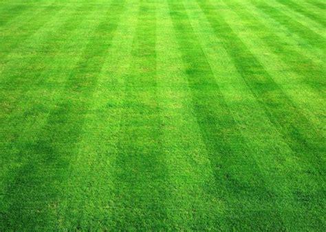 Lawn Grass Seeds Dark Green Soft Runner Game Grass Plant
