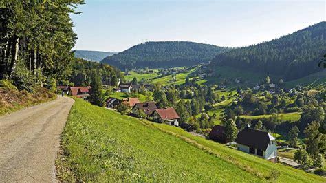 """Die europäische stechpalme ist baum des jahres 2021, bekannt auch als """"hülse und """"ilex. Baiersbronn Stadt - Hotel Löwen Schwarzenberg"""