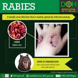 Human Rabies Prevention