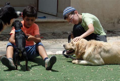 wer braucht einen hund wer einen hund trainiert trainiert sich selbst yad lami