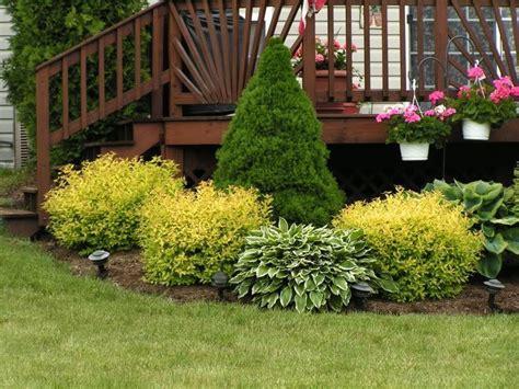 mixed evergreen border shrubs     mixed shrub