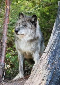 Maya Wolf