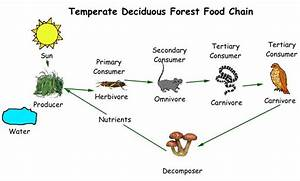 55 Types Of Food Chain And Food Web, PPT An Ocean Of Food ...