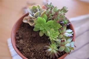 Entretien Plantes Grasses : bouturer des succulentes planb par morganours ~ Melissatoandfro.com Idées de Décoration