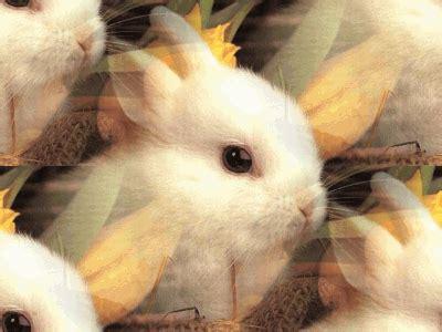 cute rabbit desicommentscom