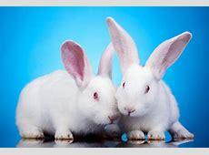 International Rabbit Day 2018 Sep 22, 2018