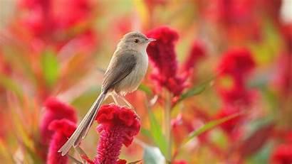 Flowers Bird Desktop Wallpapers Summer Birds Mobile