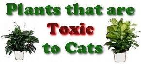 plants that are poisonous to cats catstuff plants toxic to cats