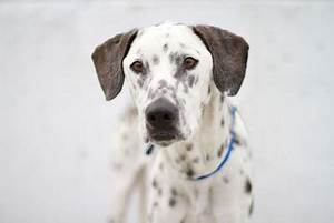 One Bark at a Time: Toronto Animal Services dog photos June 13