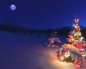1280x1024 Christmas tree in the snow desktop PC and Mac ...