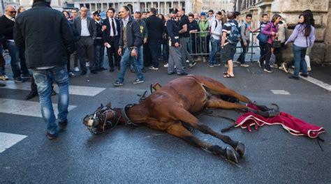 caf si鑒e social botticelle nuovo incidente cavallo si accascia a terra a roma mysocialpet it