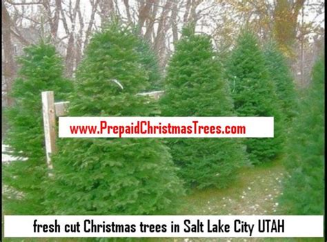 christmastree lot utah trees utah free images at clker vector clip royalty free