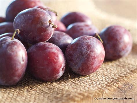 cuisine prune crumble de prunes rouges jardin des gourmandsjardin des