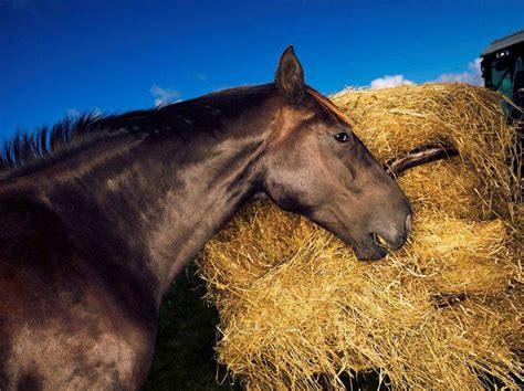 horse grazing animals herbivore