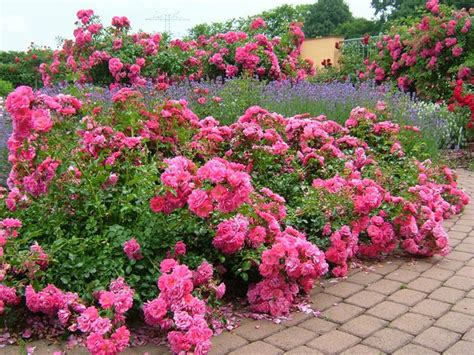 Your Easy Garden