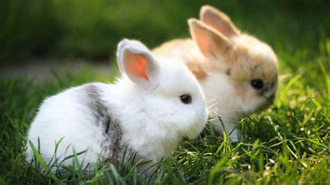 可爱大眼萌小兔子超清电脑桌面壁纸图片大全(2)_可爱图片