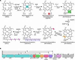 Diagram Enzymes