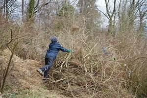 Schnell Wachsende Büsche : pflegeeinsatz im naturschutzgebiet immenberg ~ A.2002-acura-tl-radio.info Haus und Dekorationen