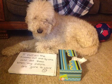 toilet paper joey friends toilet paper pups archives page 3 of 13 dogshaming