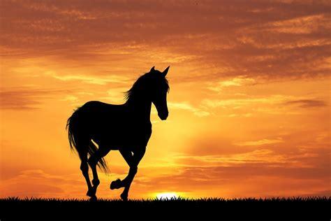 syndrome warmblood fragile foal