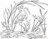 Coloring Pages Stork Storks Library Clipart Line sketch template