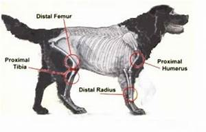 cancer in dogs canine cancer t