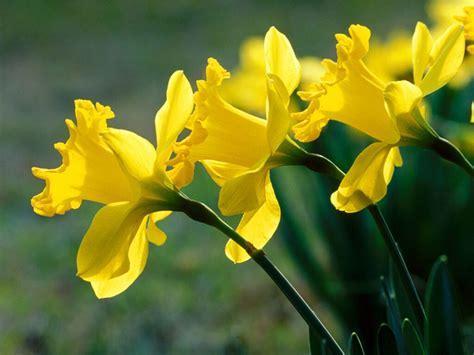 În hotărârea pronunțată de comisia liturgică a bisericii angliei, acest punct de vedere a fost contestat pe baza unei vechi tradiții, potrivit căreia data de crăciun a fost stabilit la nouă luni de la data de 25 martie, data echinocțiului de primăvară, când este sărbătorită buna vestire. Peisaje frumoase luna martie Poze si Imagini - Love Site