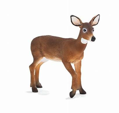 Deer Doe Tailed Woodland