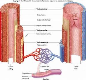 Anatomy  Physiology  And Pathophysiology