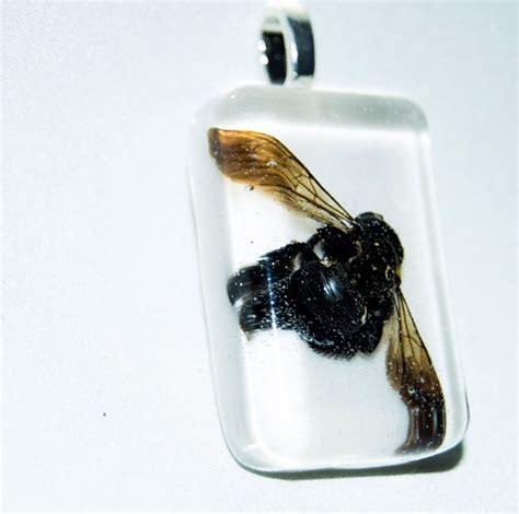 carpenter bees images  pinterest chandeliers