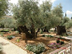 Photos From the Garden of Gethsemane