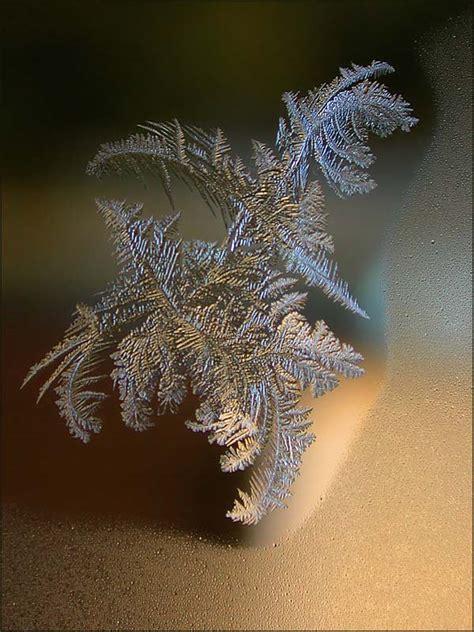frost macro photography  judy arndt