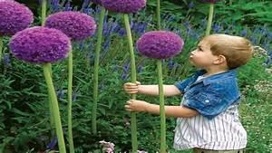 Gartengestaltung Einfach Und Günstig : garten einfach und g nstig gestalten youtube ~ Markanthonyermac.com Haus und Dekorationen
