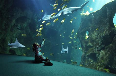 le plus grand aquarium de un week end famille 224 la d 233 couverte des plus beaux aquariums de