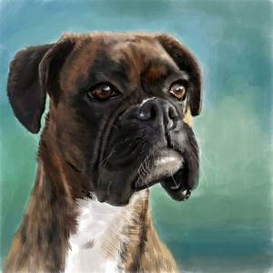 The gallery for --> Boxer Dog Outline
