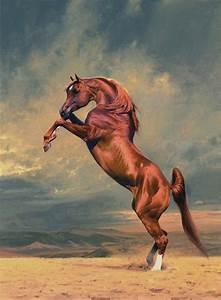 Peter Smith-Arabian horses. Talk to LiveInternet - Russian ...