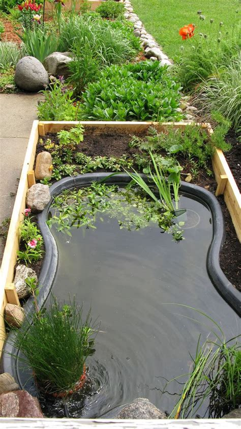 advice  starting   garden pond gardens