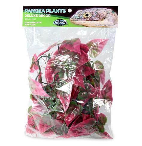 Pangea Plants | Red | Pangea Reptile