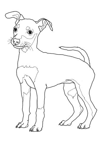 miniature pinscher puppy coloring page super coloring