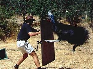 The Cassowary - Another Animal That Will Most Likely Rip ...