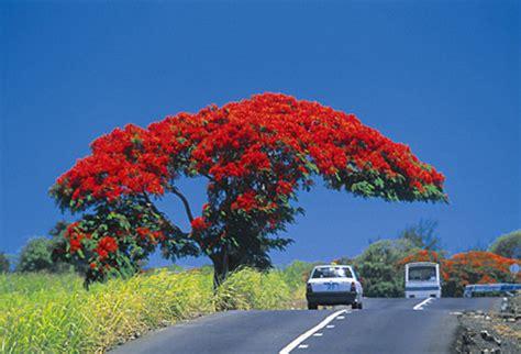 Mauritius :: Fotos