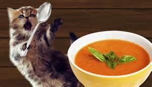 for cats so soup for cats is a thing now metro news