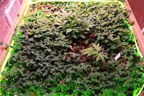 discuss indoor organic no till soil growing