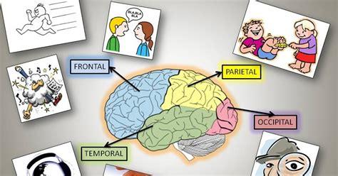 FISIOLOGÍA HUMANA: Funciones de los lóbulos cerebrales