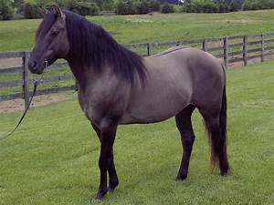 dune horse