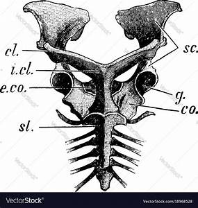 35 Label The Parts Of The Scapula In The Following